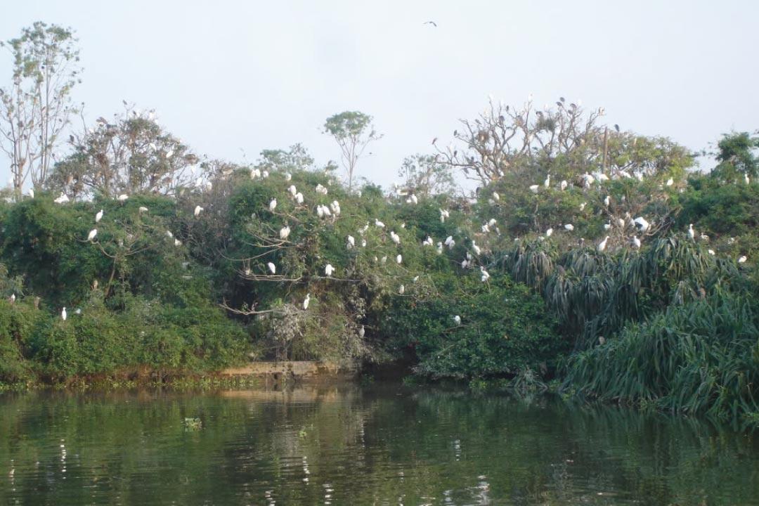 Đảo cò Chi Lăng tại TP Hải Dương